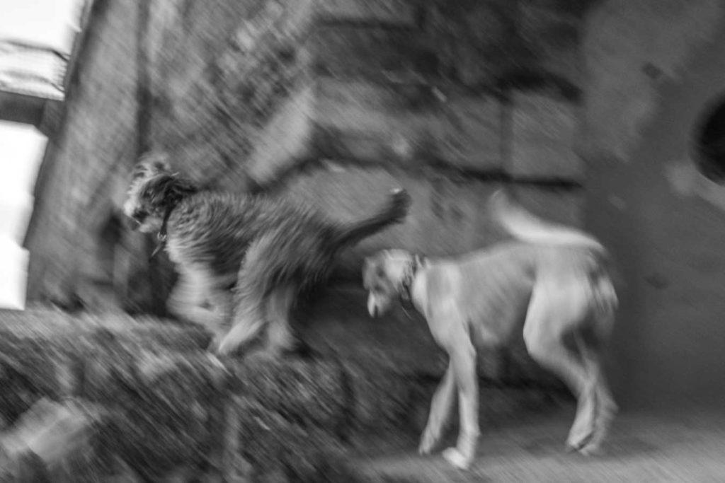 tarde de perros